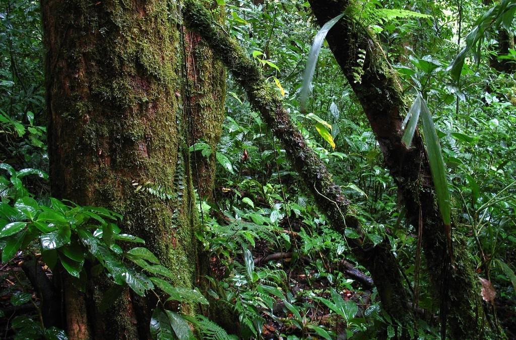Distribución de especies arbóreas ante los efectos del cambio climático Estimación de los posibles cambios en la distribución de especies de flora arbórea en el Pacífico Norte y Sur de Costa Rica en respuesta a los efectos del cambio climático