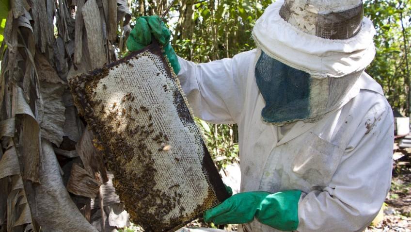 El productor apícola Claudio Mora asegura que hay un desorden climático en la naturaleza que está debilitando fuertemente la producción de miel en el país (Créditos: Foto: Katya Alvarado)