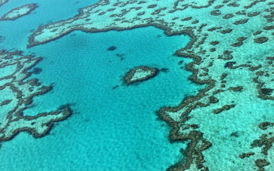 La Gran Barrera de Coral de Australia pierde color debido al calentamiento