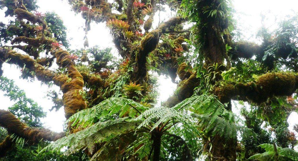 Bosque nuboso en la Isla del Coco.