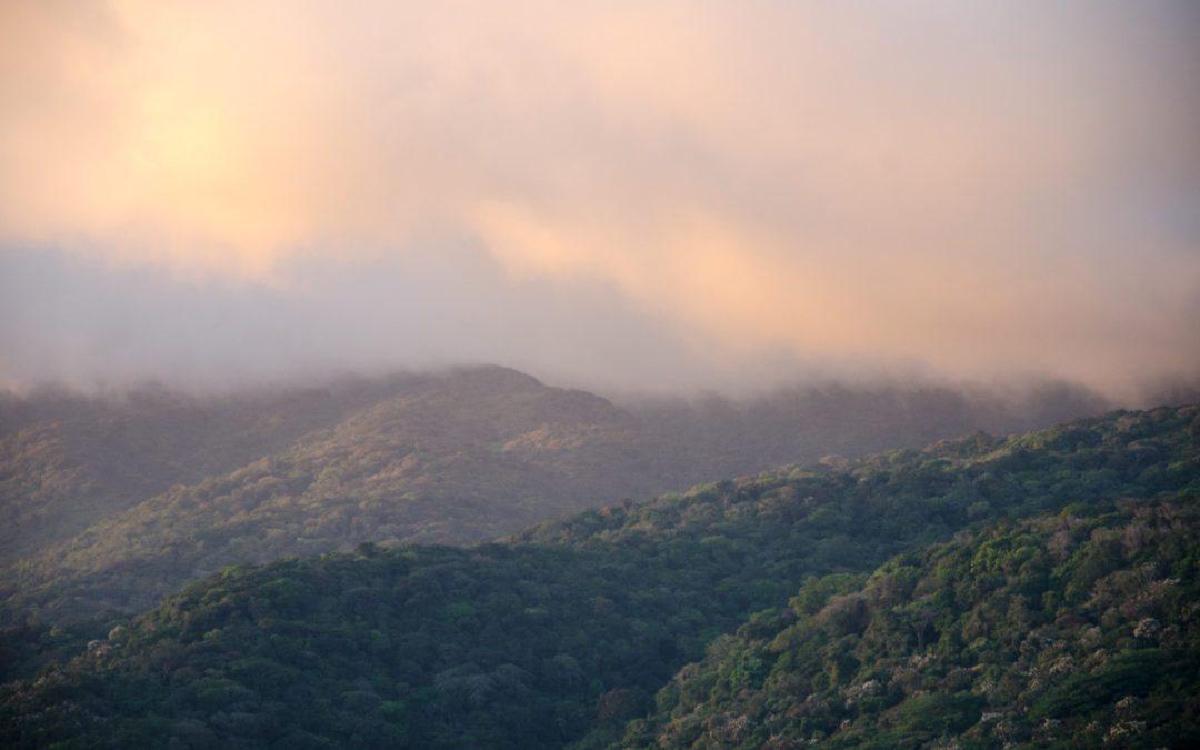 Costa Rica mejoró su cobertura forestal. Ahora debe pensar en ecosistemas.
