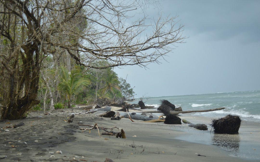 Impacto climático en los corales caribeños se puede atenuar si…