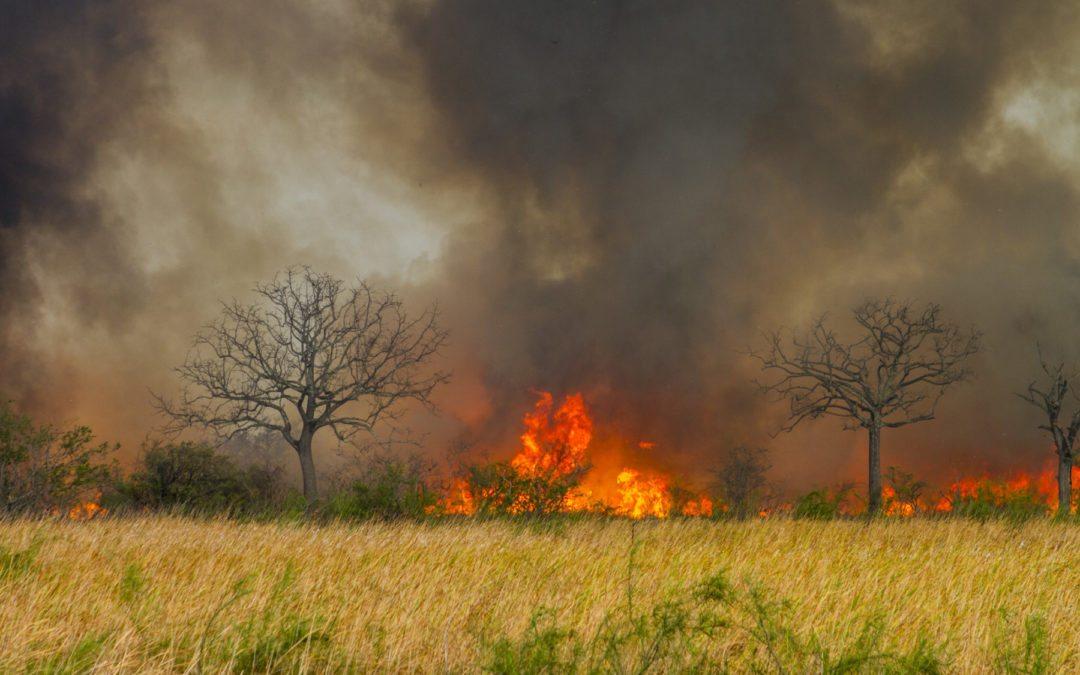 Variabilidad climática atiza incendios forestales en el país