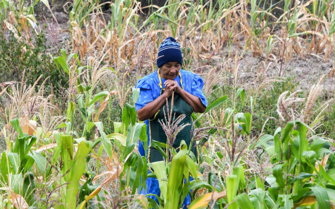 Sin maíz ni frijoles: 1,4 millones de agricultores centroamericanos necesitan asistencia alimentaria
