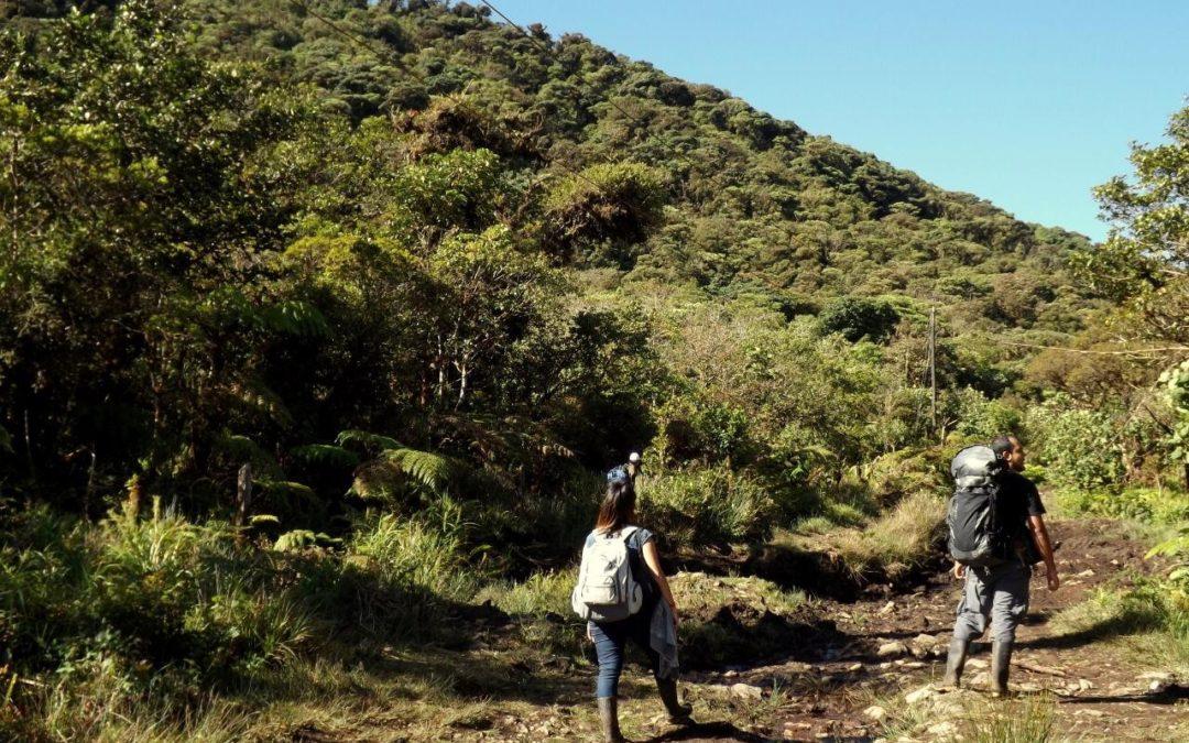 En San Ramón, los anfibios de un bosque están cambiando