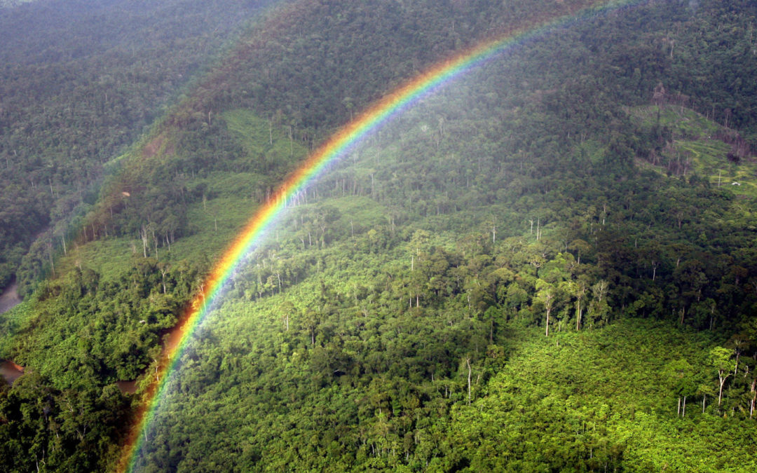 ¿Cuáles son las ventajas y los límites de la reforestación para ayudar al clima?