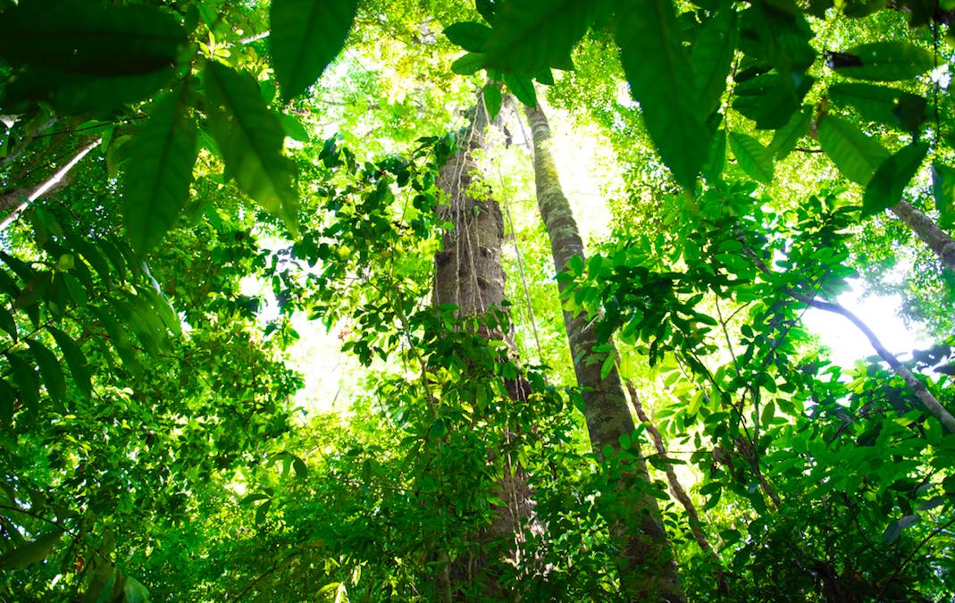 El desequilibrio ambiental nos vuelve vulnerables a COVID-19