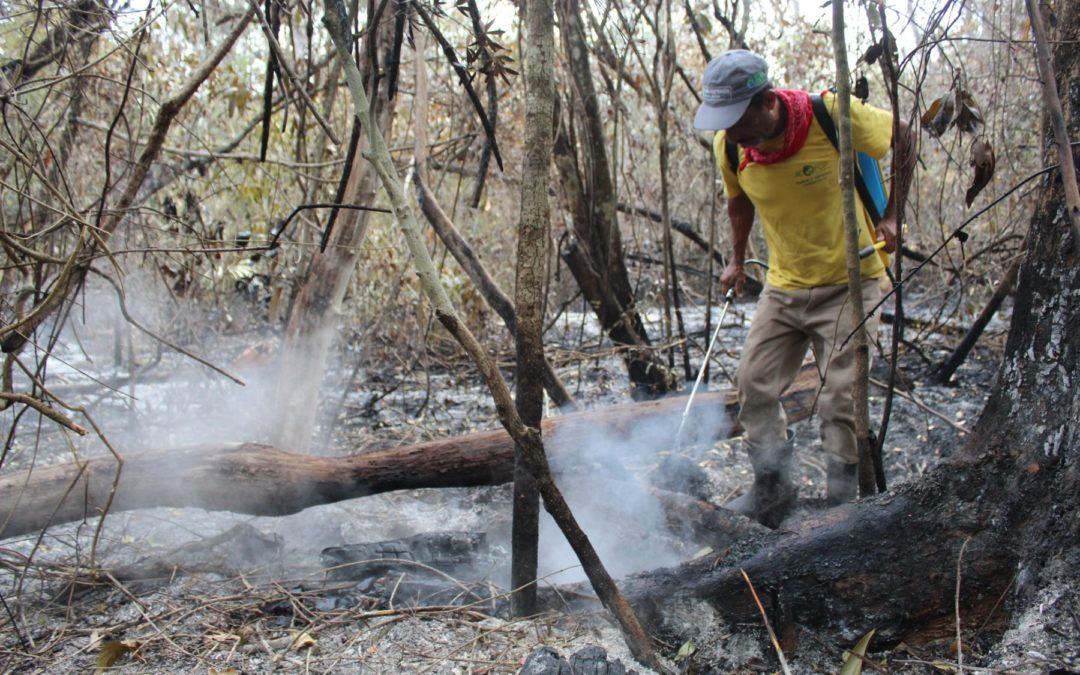Caso en Petén de Guatemala Manejo forestal comunitario es clave para prevenir incendios forestales