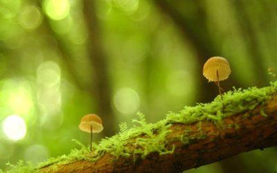 Coalición es liderada por Costa Rica, Francia y Reino Unido 50 países enfrentarán simultáneamente la pérdida de biodiversidad y el cambio climático
