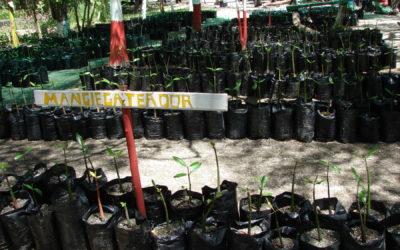 Manglares son claves en la acción climática
