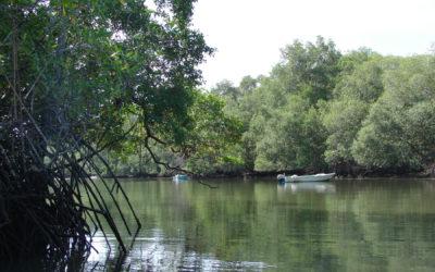 Sobrevivencia de manglares en jaque si no se reducen las emisiones
