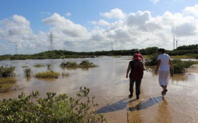 Lecciones del proyecto Ciénaga del Progreso en Yucatán (México) Dinámica del agua debe guiar la restauración de los manglares