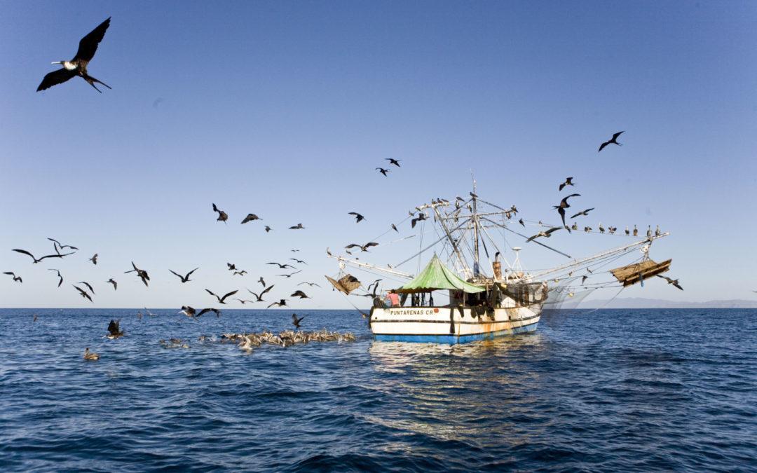 Cantidad es similar a la emitida por la aviación Pesca de arrastre remueve una gigatonelada de carbono del suelo marino al año