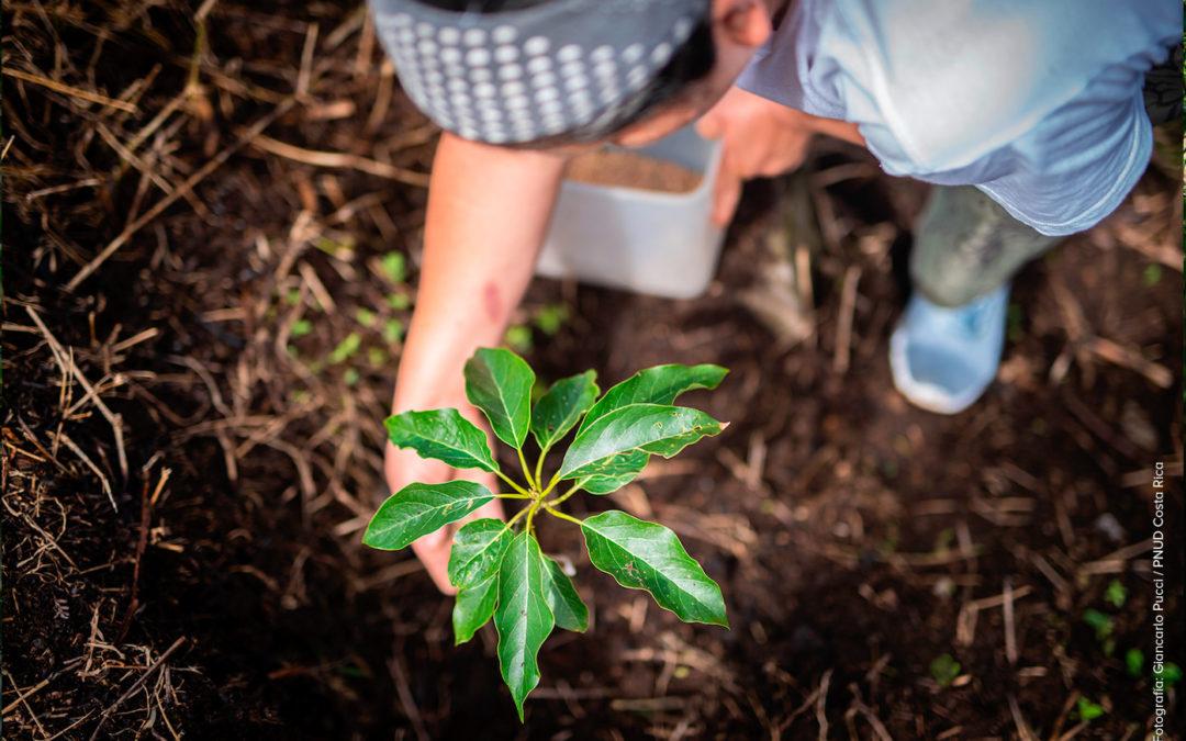 """Iniciativa """"Huella del Futuro"""" rehabilitará 400.000 hectáreas 200.000 árboles darán un respiro a la Zona Norte"""