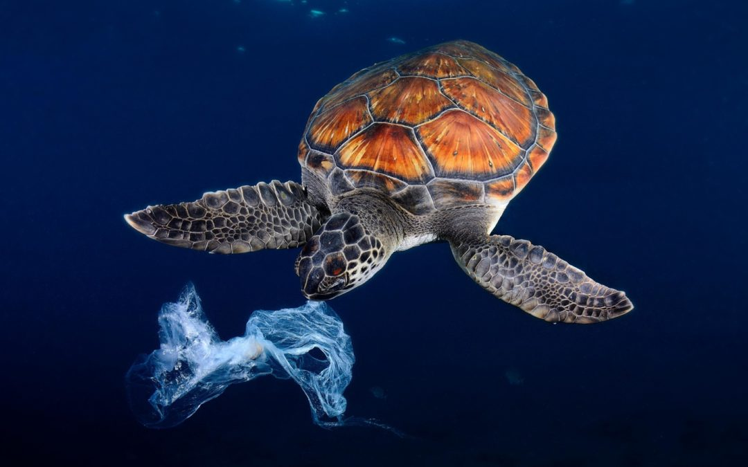 CAMPO PAGADO La importancia de mantener las prohibiciones y regulaciones a los plásticos de un solo uso
