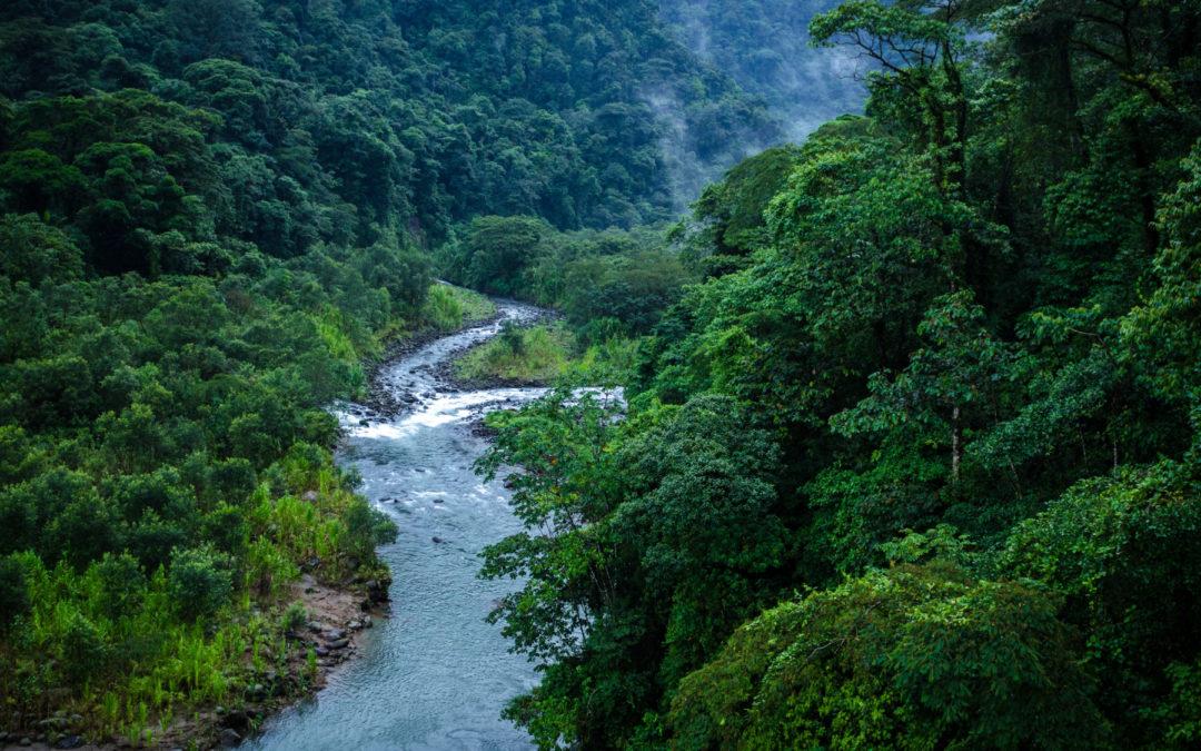 Dinero se destinará a fortalecer programa de Pago por Servicios Ambientales (PSA) País recibirá $60 millones en reconocimiento por cobertura forestal