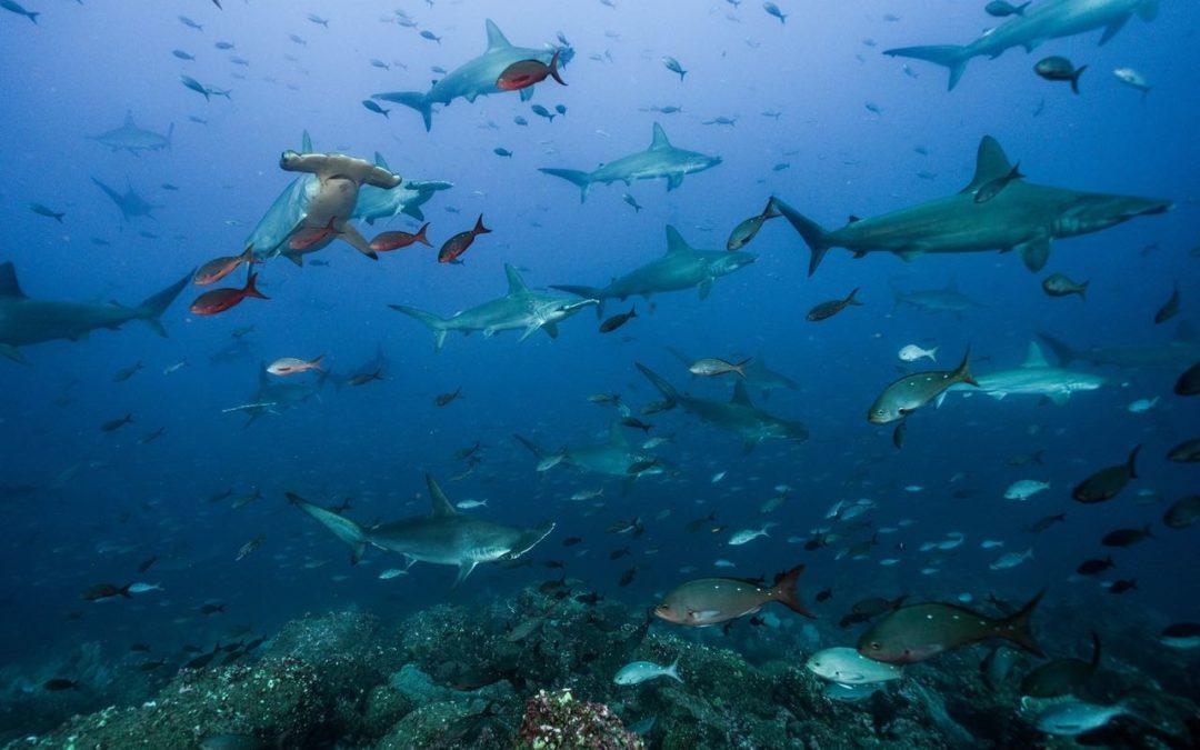 Fondo Azul por Siempre dará sostenibilidad a áreas marinas protegidas País invertirá $7 millones en proteger el 30% de los ecosistemas marinos