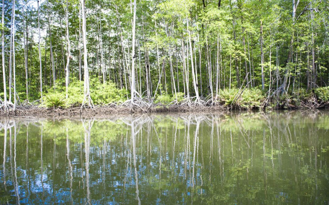 Servicio ecosistémico es brindado por manglares, marismas y pastos marinos Costa Rica incluye el carbono azul en sus metas climáticas
