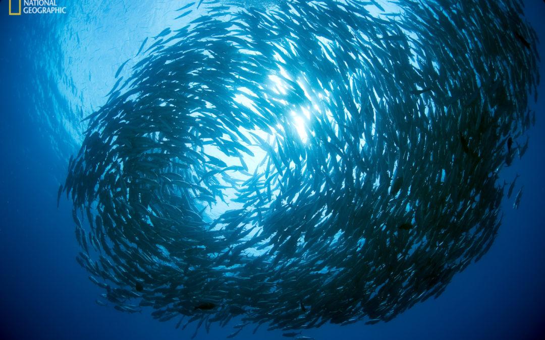 Servicios ecosistémicos se derivan de áreas marinas protegidas Proteger el 30% del océano beneficiaría al clima, la biodiversidad y la pesca
