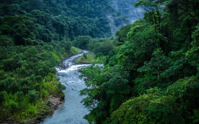 Proyecto beneficiará tanto a productores como a mujeres y jóvenes Zona Norte restaurará 2.300 hectáreas de bosque en sus paisajes agrícolas