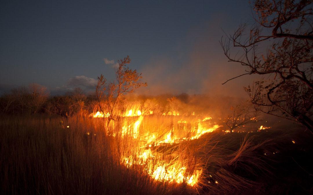 Área es el equivalente a 1.112 canchas de fútbol  Incendios forestales reducen a cenizas 794 hectáreas dentro de parques nacionales