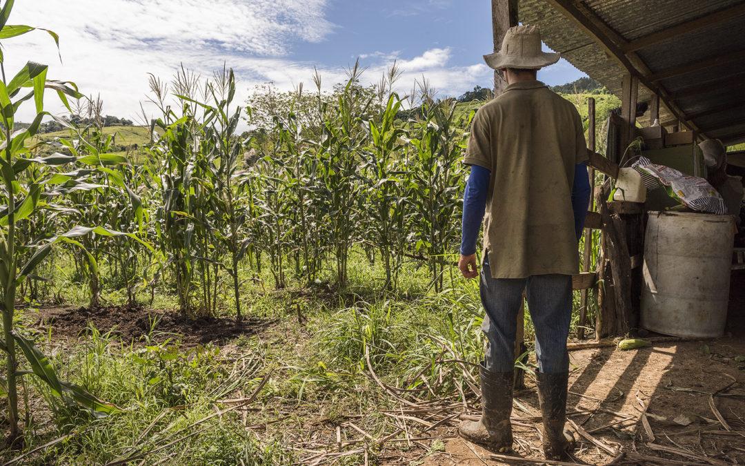 Costa Rica fue el anfitrión del Día de Lucha contra la Desertificación y la Sequía La restauración del suelo puede impulsar la recuperación post pandemia
