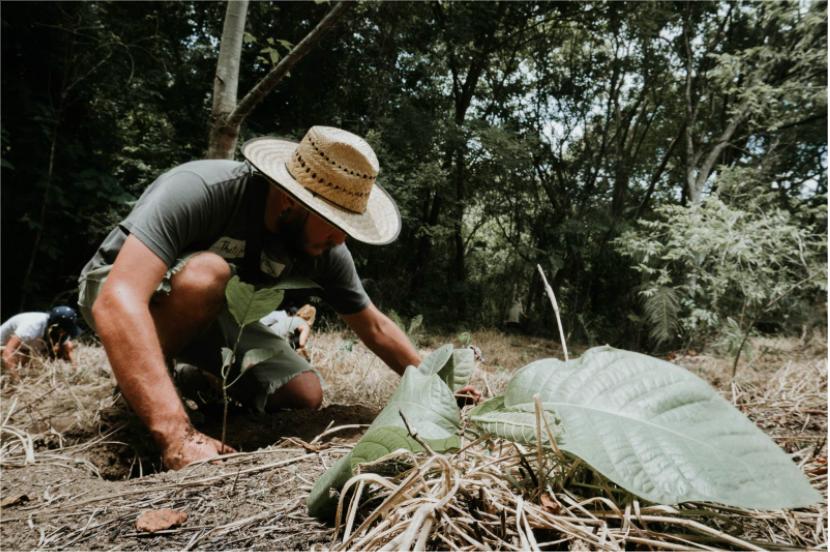 Proyecto de restauración se ubica en la comunidad Boruca en Puntarenas Jóvenes e indígenas siembran un bosque para que nazca el agua