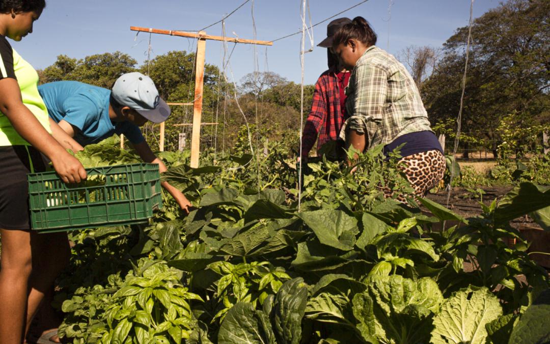 Enfoque podría revertir en tres décadas los efectos del cambio climático Guanacaste opta por el desarrollo regenerativo para superar la crisis por COVID-19
