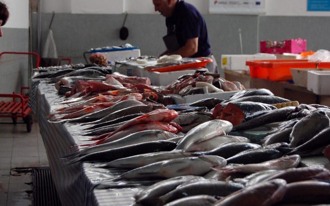 ODS 14 - Vida Submarina Pesca ilegal se incrementó durante la pandemia en Latinoamérica