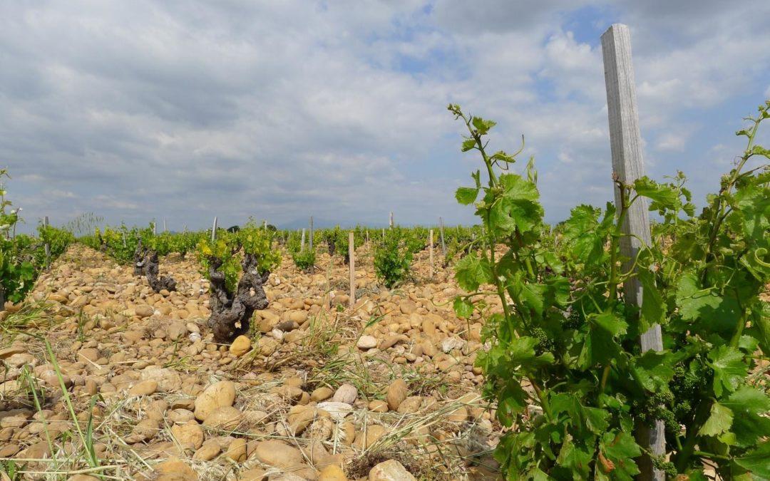 Calentamiento global propició ola de frío con secuelas devastadoras para viñedos en Francia