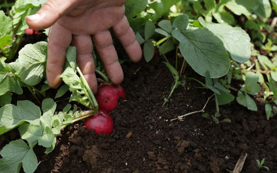 Conferencia AllTech One Ideas se llevó a cabo del 22 al 24 de junio Agricultura urbana: una tendencia en crecimiento que impulsa la acción climática