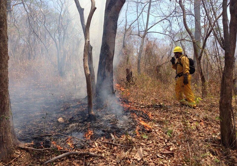 En áreas silvestres protegidas como parques nacionales y refugios de vida silvestre Incendios forestales se redujeron de 67 a 23 casos en el último año