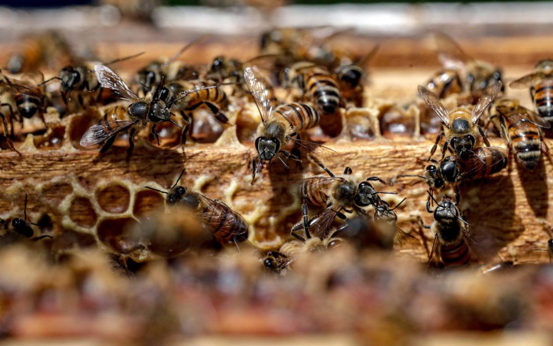 Los cantones reducen el uso de agroquímicos en espacios verdes 46 cantones del país decidieron ser amigos de las abejas
