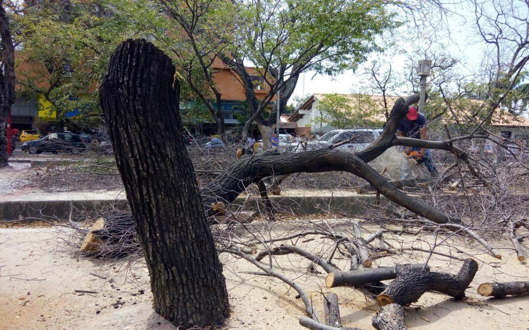 Leña se busca para cocinar, incluso en las ciudades Dependencia de los combustibles fósiles deriva en tala urbana en Venezuela