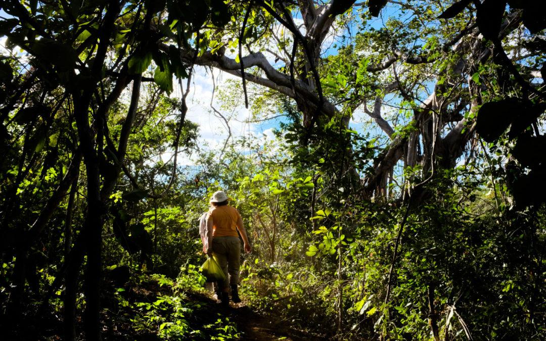 Salud humana depende de la salud de los ecosistemas Resguardar la salud: un servicio más que brindan los bosques