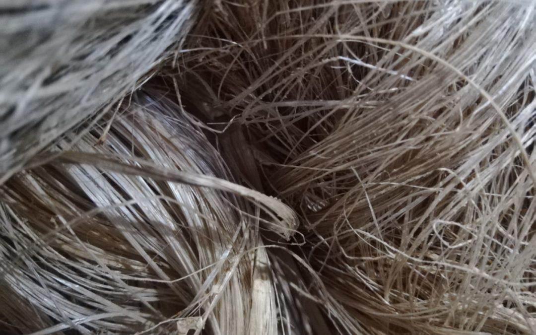 Materia prima se emplea en la producción de textiles y papel Productores ticos de fibra de abacá certifican su producción como sostenible