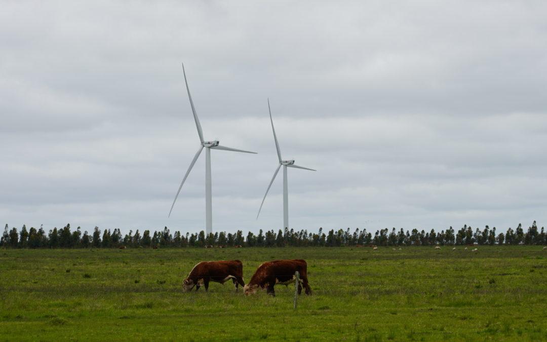 Robots, vacas y datos: el camino uruguayo hacia una economía baja en carbono